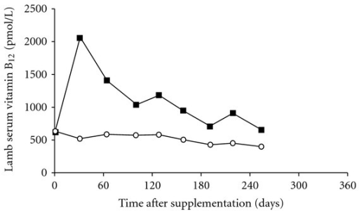 Effect of no treatment (◯) or subcutaneous injection of 3 mg microencapsulated vitamin B12 (about 0.20 mg/kg LW) (■) administered to Co-adequate lambs at docking time on serum vitamin B12 concentrations [23].