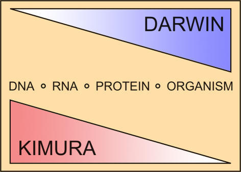 an analysis of the evolution theory proposed by charles darwin Evolution theories before darwin by the doc  in 1800 jean-baptiste lamarck proposed a coherent but wrong theory of evolution lamarck proposed that offspring inherit the characteristics their parents use most  in charles darwin's time, some british scientists, including robert edmond grant and charles lyell, while rejecting.