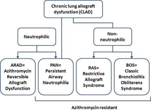 Proposed dichotomy of chronic allograft dysfunction.