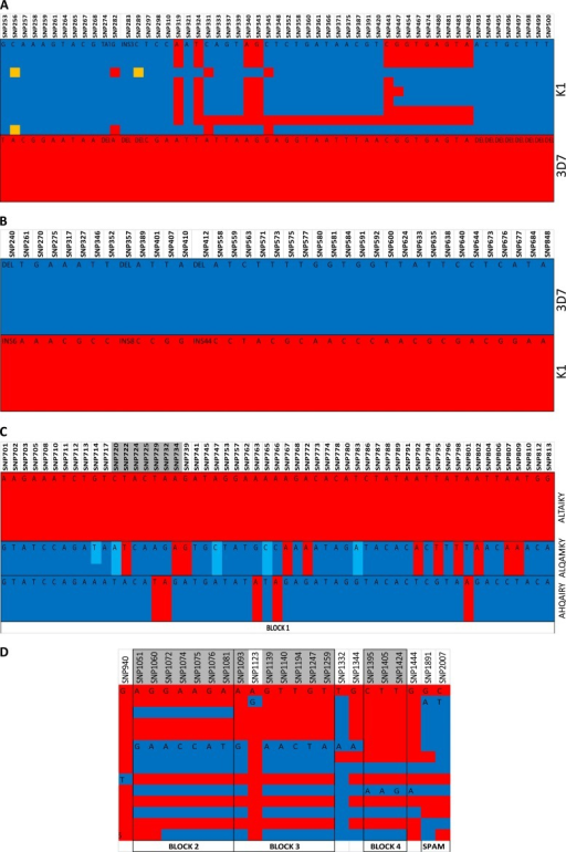 Linkage disequilibrium in the Pfmsp3 multigene family. The haplotypes were generated from an analysis of sequenced SNPs. Haplotypes shown are Pfmsp3 K1 and 3D7 (A), Pfmsp6 K1 and 3D7 (B), Pfmspdbl1 DBL domain AHQAIRY, ALTAIKY, and ALQAMKY (C), Pfmspdbl1 3′ DBL domain NEVRI, DKIQF, and NEIQF block 2, NGGRI and DEGIK block 3, TSV and TTG block 4, and the SPAM domain KN and EN (D), Pfmspdbl2 DBL domain AHQAIRY, ALQAIKY, and ALQAMKY (E), and Pfmspdbl2 SPAM domain 8 (F). Each column represents an SNP, each color in the column represents a different nucleotide, and each row represents an isolate sequence. The black outline depicts the allelic blocks. The columns shaded in gray are in linkage disequilibrium, and the amino acids from these polymorphisms were used to define the haplotypes. INS, number of nucleotides inserted (e.g., INS3 means 3 nucleotides); DEL, absence of sequence (i.e., a deletion).