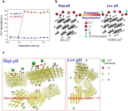 Release profile of Cu2+from ND-Cu2+complex at different pH values. a: Desorption amount of Cu2+ from ND-Cu2+ complexes in different pH values: pH 7.4 and pH 5.5 within 24 h. b: The most stable structures of the ND-Cu2+ complex at high and low pH (denoted by ND-Cu2+ and NDH-Cu2+, respectively) obtained by theoretical computation. c: Molecular modeling illustrations for the adsorption of Cu2+ on ND aggregates at high pH and low pH.