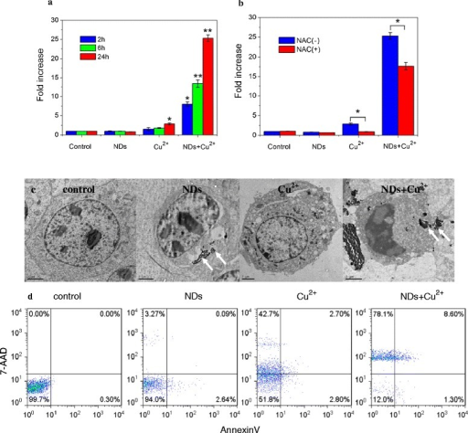 Enhancement of bioeffects by ND-vectorized Cu2+. a and b: Enhancement of Cellular ROS level by ND-vectorized Cu2+. a: ROS generation, b: NAC protection (*p < 0.05, **p < 0.01, one-way ANOVA for comparison). c: TEM images of a typical L929 cell after incubation with NDs, Cu2+ and NDs-Cu2+ mixture for 24 h. Arrows indicate NDs (Scale bars = 2 μm). d: Flow cytometric analysis of L929 cells after incubation with NDs, Cu2+ and NDs-Cu2+ mixture for 24 h.