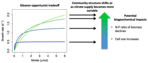 A hypothetical example of how resource acquisition trade-offs interact with environmental conditions to determine community structure, with biogeochemical consequences. Monod growth curves are plotted for four species that exhibit an 'opportunist-gleaner' trade-off, where high maximum growth rate comes at a cost of reduced affinity. If nutrient supply shifts from relatively constant to highly variable, this shifts the relative fitness of the different strategies, with different species dominating under different conditions. Shifts in community composition may have biogeochemical impacts, such as reduced biomass N:P when opportunists dominate (growth rate hypothesis), or increased phytoplankton cell size (smaller cells tend to have higher affinity). A further possibility is that multiple strategies may coexist under variable nutrient supply, which is not depicted in the diagram.