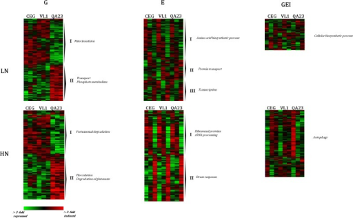 Hierarchical clustering of genes identified as exhibiting significant genotype (G), environmental (E), and gene-by-environment (GEI) effects in each of the fermentations (LN and HN).The diagrams show the log2 expression differences in the indicated strains compared to the mean expression of that gene in all strains in each fermentation. Each row represents a given gene and each column represents a different strain within which expression is ordered by fermentation stage (12, 24 and 96h). Red and green correspond to higher and lower expression, respectively. Clusters are annotated at the right with characteristic GO category functional enrichments (S2 Table).