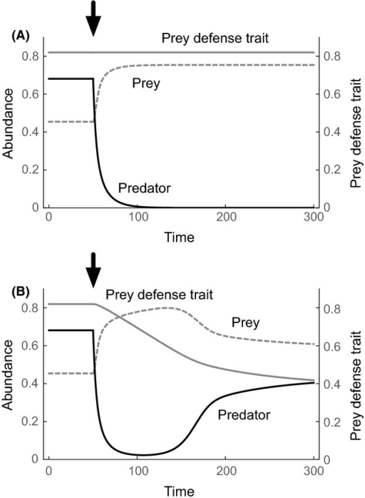Indirect evolutionary rescue in eqn (1). An abrupt environmental change occurs when t = 50 as indicated by arrows (the predator mortality, m, changes from 0.2 to 0.4). Without prey evolution, the predator goes extinct (A), whereas when prey can evolve, the predator population increases after its initial decline (B). Adaptive evolution lowers prey defense (B), which stays constant in the case of no evolution (A). Black solid lines: predator abundance, gray dashed lines: prey abundance, and gray solid lines: prey defense trait. Parameter values are a = 0.3, G = k = b = 1, and Vx = 0 (A) or 0.01 (B). The predator and prey abundances and the prey trait reached an equilibrium before the environmental change with Vx > 0.