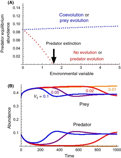 Effects of predator evolution, prey evolution, or both, on abundances following an environmental change that negatively affects predation rate. (A): X-axis is the environmental variable; positive values of larger magnitude cause larger decreases in predation rate. Y-axis is predator equilibrium abundance. Additive genetic variance of evolving traits in prey (V1) and predator (V2) is either 0 (no evolution) or 1 (with evolution). Red dots: no evolution (V1 = V2 = 0), or with predator evolution only (V1 = 0, V2 = 1), blue dots: with prey evolution only (V1 = 1, V2 = 0), or with both predator and prey evolution (V1 = V2 = 1). Note that the environmental variable was multiplied by −1 to be consistent with Fig. 2. Other parameters match those of Fig. 4 of Northfield and Ives (2013). (B): Effects of prey additive genetic variance on rescue of the predator following an environmental change detrimental to the predator (an abrupt change from 0 to 3 on the X-axis of 3A). Additive genetic variance of prey (V1) is 0.1 (blue), 0.05 (purple), 0.02 (red), or 0.01 (orange), whereas that of predator (V2) is 0.