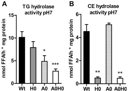 Abolished neutral TG hydrolase activity in A0H0 macrophages. Neutral (A) TG and (B) CE hydrolase activities were measured in Wt, H0, A0, and A0H0 macrophages. Data are presented as mean (n = 4–6) + SEM. *, p < 0.05; **, p ≤ 0.01; ***, p ≤ 0.001.