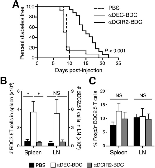 Stimulation of BDC2.5 T cells by DCIR2+ DCs delays diabetes development in NOD.scid mice. A: Percent of NOD.scid mice that are diabetes free after injection with CD4+CD25− BDC2.5 T cells and the indicated treatments. Statistical analysis was performed with log-rank test. P < 0.001 for αDEC-BDC vs. αDCIR2-BDC; P = 0.452 for PBS vs. αDEC-BDC. Summation of four experiments. n = 28 mice treated with PBS, n = 20 mice treated with αDEC-BDC, and n = 19 mice treated with αDCIR2-BDC. BDC2.5 T cells (5 × 104) were transferred to NOD.scid mice and treated with the indicated conditions. Graphs indicate the total BDC2.5 T-cell number (B) and the ratio of Foxp3+ BDC2.5 T cells (C) in NOD.scid mice on day 5. Average of three independent experiments ± SEM. Statistical analysis was performed with one-way ANOVA with Bonferroni posttest. *P < 0.05. LN, lymph nodes; NS, not significant.