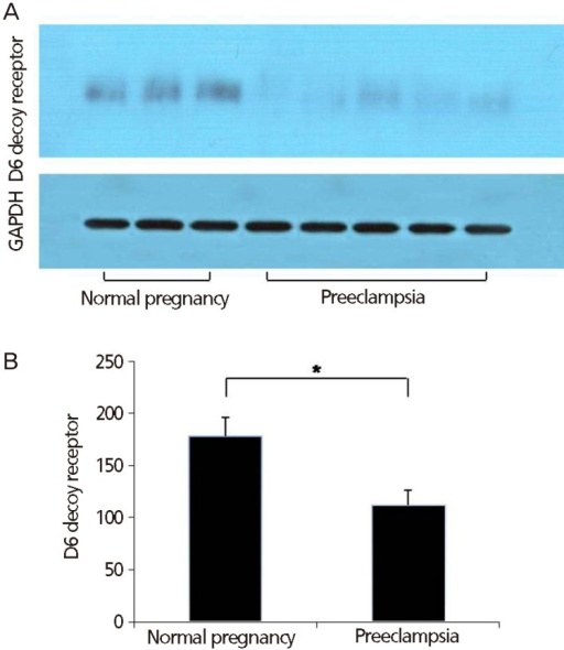 Western blot analysis for protein expression of placental D6 decoy receptor from preeclamptic and normal placentas. (A) Results from a representative experiment. Bands of almost identical intensity for GAPDH are also shown for each experiment. (B) Mean±standard error of the mean of densitometric numbers was calculated by densitometry. Data were analyzed using ANCOVA (analysis of variance with a covariant) with gestational age as covariant. *P<0.05.