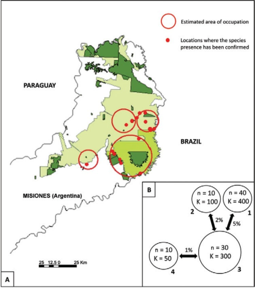 distribution of remnant populations of brown howlers in Misiones,Argentina, estimated by the workshop participants. Red circles represent thepotential subpopulations (numbered from 1-4) currently present in Misiones. Redpoints represent locations where the species presence has been confirmed (atleast before the yellow fever outbreaks); B: distribution, size (n), potentialcarrying capacity (K) and connectivity of brown howler monkeys estimated inMisiones by the workshop participants.