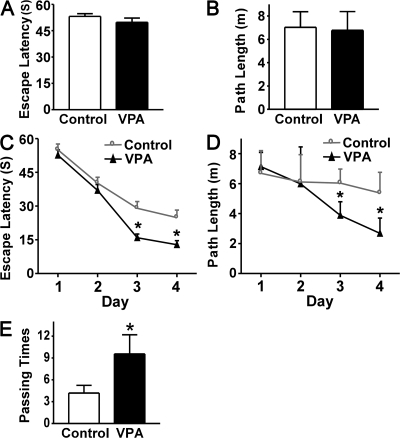 VPA improves memory deficits in AD transgenic mice. A Morris water maze test consists of 1 d of visible platform tests and 4 d of hidden platform tests, plus a probe trial 24 h after the last hidden platform test. Animal movement was tracked and recorded by HVS 2020 Plus image analyzer. The 7-mo APP23 age group mice were tested after 1 mo of daily VPA (n = 30 mice) or vehicle solution (n = 30 mice) injections. (A) During the first day of visible platform tests, the VPA-treated and control APP23 mice exhibited a similar latency to escape onto the visible platform. P > 0.05 by Student's t test. (B) The VPA-treated and control APP23 mice had similar swimming distances before escaping onto the visible platform in the visible platform test. P > 0.05 by Student's t test. (C) In hidden platform tests, mice were trained with 6 trials per day for 4 d. VPA-treated APP23 mice showed a shorter latency to escape onto the hidden platform on the third and fourth day. P < 0.001 by ANOVA. (D) The VPA-treated APP23 mice had a shorter swimming length before escaping onto the hidden platform on the third and fourth day. P < 0.01 by ANOVA. (E) In the probe trial on the sixth day, the VPA-treated APP23 mice traveled into the third quadrant, where the hidden platform was previously placed, significantly more times than controls. *, P < 0.005 by Student's t test.