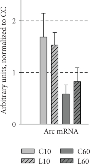 Expression levels of Arc in the dentate gyrusafter object recognition. Fold change in mRNA levels (relative to the CCgroup) is presented for Arc in the dentate gyrus of animals from all fivegroups (n = 8 for all groups, except L60, n = 7). Data are presented as mean ± SEM.Gene expression was normalized to control genes (see methods).