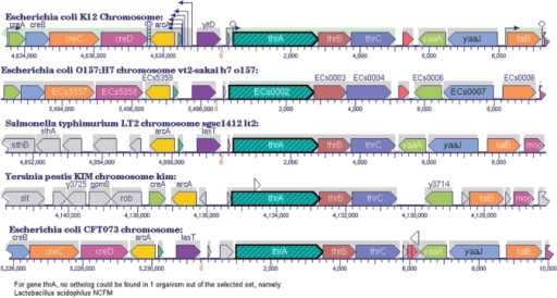 Cluster comparison gene diagrams ccuart Image collections