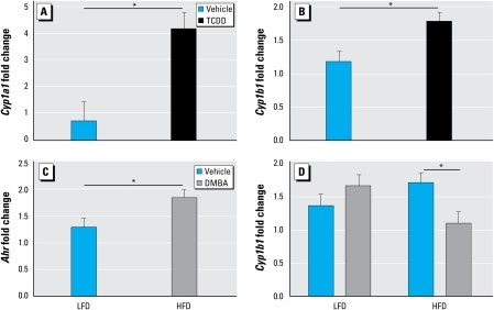 Maternal TCDD exposure and effect of diet on gene expression. Normalized message levels are represented as mean ± SE. (A) Induction of Cyp1a1 was increased by TCDD exposure compared with vehicle (n = 11 and 10 litters, respectively). Measurements were pooled across diet and DMBA groups. (B ) Induction of Cyp1b1 was increased by TCDD compared with vehicle (n = 11 and 10 litters, respectively). Measurements were pooled across diet and DMBA groups. (C) Induction of Ahr was increased by HFD relative to LFD (n = 11 and 10 litters, respectively). Measurements were pooled across TCDD and DMBA groups. (D) Induction of Cyp1b1 by DMBA was decreased compared with vehicle in HFD-fed but not in LFD-fed D2 mice. LFD groups are vehicle (n = 5 litters) and DMBA (n = 5 litters); HFD groups are vehicle (n = 6 litters) and DMBA (n = 5 litters).*p < 0.05.