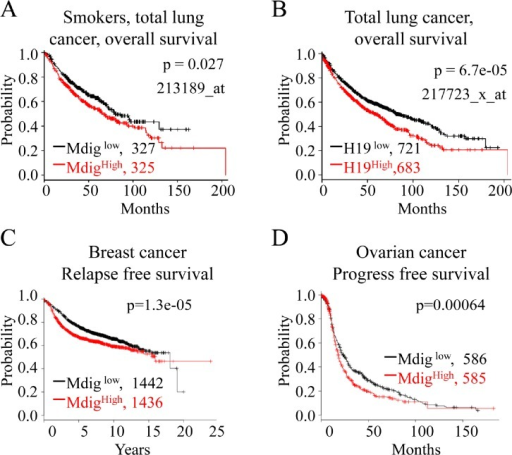 Higher expression of mdig and H19 is associated with poorer survival of cancer patientsA. Kaplan-Meier plot showing poorer survival of the lung cancer patients who were smokers or former smokers and had higher expression of mdig mRNA. B. Higher level of H19 expression correlates with poorer survival of lung cancer patients. C & D. Higher level of mdig is associated with poorer relapse-free survival of the breast cancer patients and poorer progress-free survival of the ovarian cancer patients.