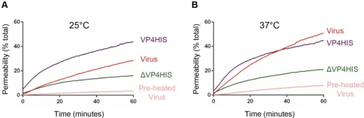 VP4-induced permeability is comparable to that of virus.Carboxyfluorescein-containing liposomes were mixed with VP4His at 5 µM (equivalent to approximately 5 µg/assay) or 1 µg HRV16 (equivalent to 50 ng VP4/assay) and membrane permeability detected by fluorescence measurements recorded every 30 seconds. Assays were conducted at 25°C (A) or 37°C (B). Only a minority proportion of recombinant protein is thought to take part in the reaction. Data is presented as % of total end-point release observed by lysis of liposomes by addition of detergent. Data shown is representative of multiple experiments (n>3).