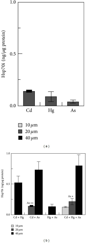 Toxic metals induce HSP70i accumulation in podocytes in a dose-dependent manner. Results of a quantitative western blot analysis of HSP70i accumulation in podocytes treated with various concentrations of individual toxic metals (a) or combinations of two and three toxic metals totaling 10, 20, or 40 mM (b) for 3 days. Values are expressed as ng of HSP70i per mg total protein. Basal HSP70i levels were below the limits of detection [100].