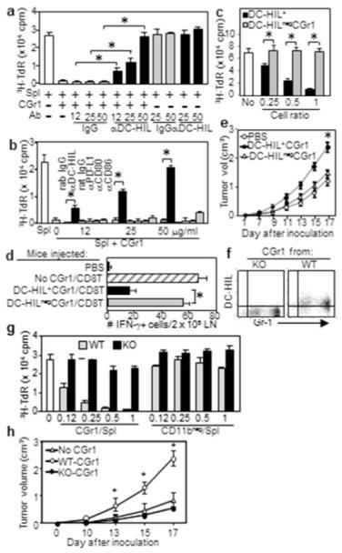DC-HIL mediates T cell-suppressor activity of CD11b+Gr1+ cells(a, b) CGr1 cells from melanoma-bearing mice were cocultured with pmel-1 splenocytes (Spl), gp100 Ag, and anti-DC-HIL mAb (a), anti-coinhibitor Ab or control IgG (b). 3H-TdR incorporation measured. (c) Undepleted (DC-HIL+) or DC-HIL-depleted (DC-HILneg) CGr1 (Supplementary method) were assayed for suppression of pmel-1 splenocyte proliferation triggered by Ag (increasing ratios). (d) Mice (n=5) injected with pmel-1 CD8+ T-cells and DC-HIL+CGr1 or DC-HILnegCGr1. Ten days after giving gp100, IFN-γ-producing cells in LN were counted. (e) Tumor growth following coinjection of DC-HIL+ or DC-HILneg CGr1 cells with B16 cells s.c. into naive mice (n=5). Using similar methods, DC-HIL−/−CGr1 cells were compared with DCHIL+/+ counterparts for DC-HIL expression by FACS (f), T-cell suppressing (g) and tumor-promoting ability (CD11bneg cells as control) (h). *p<0.01.