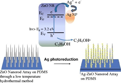 In situprocess for depositing Ag NPs on ZnO nanorods which grew on a PDMS substrate.