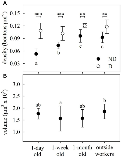 Age-dependent structural plasticity in the MB calyces. (A) Bouton density in both the ND and D lip subregions of the MB calyces. Number of boutons per area increased with age in the ND lip and remained constant in the D lip, where the overall density was higher. (B) Total lip volume varied with ant age. Dots represent the mean value of each group and lines the S.D. Asterisks indicate significant differences between lip subregions (ND vs. D lip): ** p < 0.01; *** p < 0.001. Different letters indicate significant differences in ND lip or lip volume among ages. One-day old, N = 9; 1-week old, N = 8; 1-month old, N = 5; outside-workers, N = 6.
