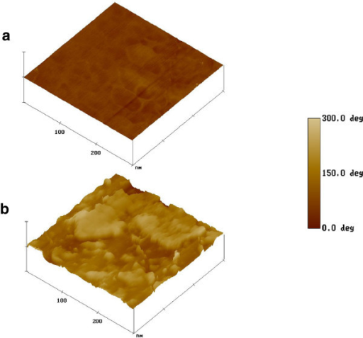 AFM phase images of nanofibrous scaffold surface; (a) PHBV and (b) PHBV–Col (Adapted from reference[128]).