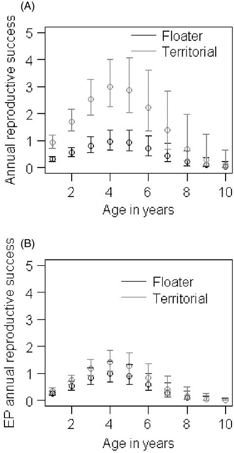 Generalized linear mixed model (GLMM) plots based on the average model parameters (Model set 3) showing changes in (A) annual reproductive success (ARS) with age and (B) extra-pair (EP) ARS with age for territorial (dark grey solid lines) and floater (black solid line) males. Vertical lines are the 95% confidence intervals around the mean.
