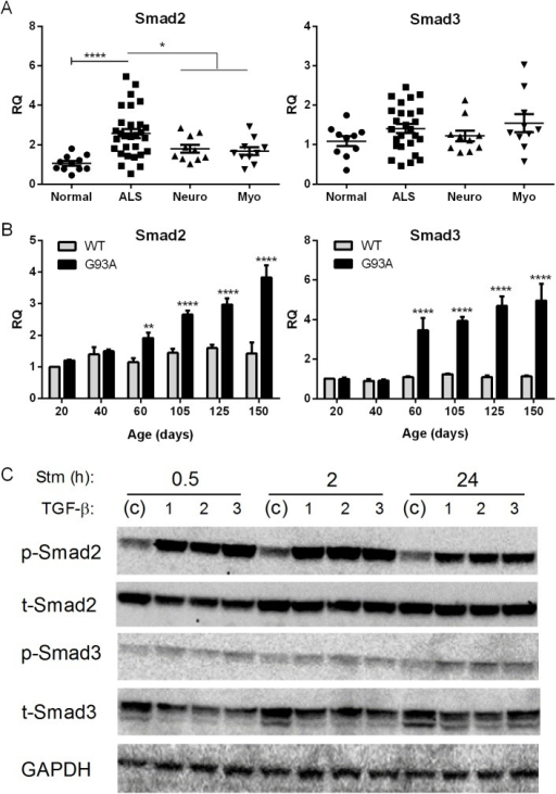 smad2 and 3 are increased in als muscle.(a) total rna f | open-i, Muscles