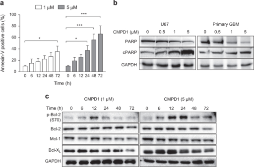 CMPD1 induces apoptosis and changes expression of Bcl-2 family proteins. (a) U87 cells were treated with CMPD1 for indicated time and the percentage of Annexin-V-positive cells was determined by flow cytometry. Data are expressed as mean±S.E.M. (n=3; *P<0.05, ***P<0.001, two-way ANOVA followed by Bonferroni post-test). (b) U87 and primary human glioblastoma cells were treated with CMPD1 (48 h) and analysed for expression of PARP (116 kDa) and cleaved PARP (85 kDa) using western blotting. Representative images of three independent experiments are shown. (c) U87 cells were treated with CMPD1 for indicated time and cell lysates analysed with western blotting using indicated antibodies. Representative images of three independent experiments are shown.