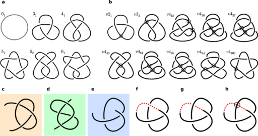 Classical and virtual knot diagrams.(a) The first six classical knots in the standard tabulation (including the unknot 01); all but 51 have been identified as dominant knot types in at least one protein under sphere closure5. (b) The virtual knots with n = 2,3,4 as tabulated in ref. 20, all of which can arise as virtual closures of open knot diagrams (i.e. the minimally genus one virtual knots, described in Supplementary Note 1). Virtual crossings are shown as circles. (c–h) show examples of open diagrams, which may be identified under virtual closure as classical or virtual knots. (c–e) are equivalent to the projections from Fig. 1(d). (f) and (g) show (e) closed with a classical arc passing above or below the intervening strands, forming an unknot 01 and trefoil knot 31 respectively, while (h) shows (e) closed instead with a virtual crossing to produce the knot v21.