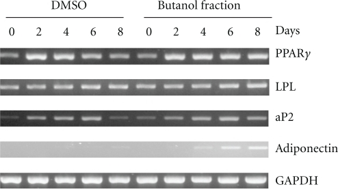 The effect of butanol fraction of A. indicum to induce mRNA expression of the PPARγ target gene. 3T3-L1 preadipocyte cells were differentiated. Twenty-four hours before and during differentiation, cells were treated with vehicle control (DMSO) or 100 μg ml−1 of butanol fraction. mRNA expression of PPARγ, LPL, aP2, adiponectin and glyceraldehyde 3-phosphate dehydrogenase (GAPDH) were measured at Days 0, 2, 4, 6 and 8 of differentiation.