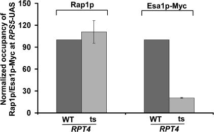 Analysis of recruitment of Rap1p and NuA4 HAT (Esa1p-myc) to the RPS5 promoter in the wild-type and rpt4-ts mutant strains following ts inactivation of Rpt4p at 37°C for 1 h. Immunoprecipitations were performed as described in Figures 3A and B.