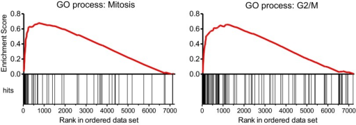 Gene set enrichment analysis (GSEA) of the expression profile of CD34+ cells upon MYBL2 knockdown.The highest scoring subset using the 'gene ontology processes' gene sets of MSigDB (v3.0) was the 'mitosis' gene set (left panel). Gene sets reflecting distinct phases of the cell cycle were used to determine the prominent cycle phase, and the gene set 'G2/M' had the highest score (right panel).DOI:http://dx.doi.org/10.7554/eLife.00825.009