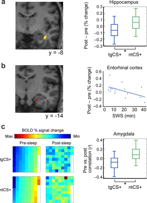 Sleep-related modulatory effects of target odorant re-exposure on fMRI activity(a) Activity evoked by tgCS+ (vs. ntCS+) was reduced from pre- to post-sleep in anterior hippocampus (t[14]=−4.65, **P<0.001; adjusted for CS− baselines). Activation maps are overlaid on a T1-weighted coronal section from a representative subject (display threshold, P<0.005). Box plots (right) indicate median (central line) and upper/lower quartiles (top/bottom of box) for each condition. Whiskers denote extent of data between 10th and 90th percentiles. (b) Post-sleep (vs. pre-sleep) activity in entorhinal cortex evoked by tgCS+ (vs. ntCS+) was negatively correlated with the duration of odorant re-exposure during SWS (r=−0.51, P=0.05, n=15). (c) (Left) Voxel-wise ensemble maps of left amygdala activity from one subject show that condition-specific patterns diverged more for tgCS+ (vs. ntCS+) from pre- to post-sleep. Each square represents signal intensity from a different voxel (n=75), arranged in columns from top left to bottom right, in ascending order for tgCS+ in the pre-sleep condition. (Right) Across all subjects, pre- and post-sleep pattern ensembles in amygdala became more distinct (less correlated) for tgCS+ compared to ntCS+ (t[14]=−2.66, *P=0.02; adjusted for CS− baselines; paired t test).