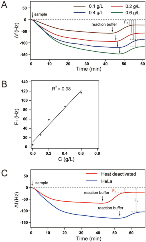 TREAQ measurement of HeLa Cells.(A) FT for HeLa cells at four different total Protein Concentrations. (B) A linear relationship (y = 185.22x + 10.6) between FT and the cell lysate concentration. (C) FT for HeLa cells on polymer surface. Samples which were heated in 90°C for 30 min were used as negative control.