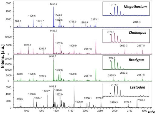 MALDI-ToF mass spectra of collagen extracted from Lestodon and Megatherium digested with trypsin. *Note the clearly observable difference in deamidation as a marker for protein ageing due to the presence of a glutamine residue in this peptide.