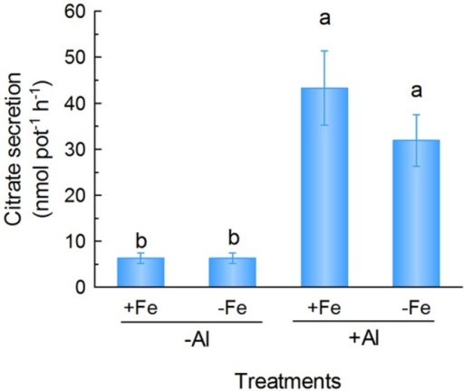 Citrate secretion from rice bean roots in response to Fe deficiency and Al stress. One-week-old seedlings were subject to nutrient solution with 20 μM Fe (+Fe) or without (-Fe) for 12 days after treatment, root exudates were collected in 0.5 mM CaCl2 solution (pH 4.5) in the absence (-Al) or presence of 25 μM Al (+Al) for 6 h. Data are expressed as means ± SD (n = 4). Columns with different letters indicate significant difference at P < 0.05.