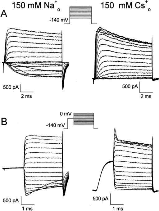 Effect of external [Na+] on F1485Q tail currents. (A)  Families of currents elicited by 9-ms depolarizations to voltages  ranging from −80 to +70 mV. Holding potential, −140 mV. Currents shown were recorded from two cells bathed in either 150  mM Na+ (left) or 150 mM Cs+ at 8.0 and 7.1°C, respectively. (B)  Tail currents were recorded from −80 to +70 mV after a brief depolarization (1.5 ms) to 0 mV from a holding potential of −140  mV. Currents recorded from the same two cells shown in A at the  same temperatures.