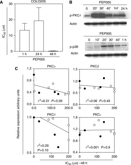 Antiproliferative effects of PEP005 in cells, according to PKC expression. (A) Cytotoxicity of PEP005 after 1, 24, and 48 h exposures in Colo205 cells. (B) Modulation of PKC δ and p38 phosphorylation by PEP005 in Colo205 cells. Colo205 cells were treated with PEP005 (0.3 μM) for the indicated time. Protein extracts were then analysed for PKC δ and p38 phosphorylation. (C) Correlation between PKC levels and sensitivity to PEP005. Expression levels of PKC α, β, δ, and ɛ were correlated with IC50 of PEP005 in 10 cancer cell lines (•, colon cancer cell lines; ○, other cell lines). All values from the densitometric analysis of western blot are standardised with respect to Colo205. The r2 value is the correlation coefficient calculated by linear regression analysis.