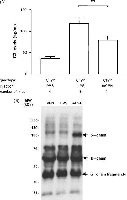Plasma C3 levels and state in Cfh−/− mice injected with purified mCFH. (A) Plasma C3 levels in Cfh−/− mice 24 h after the injection of PBS, 1 mg of purified mouse factor H or 0.75 μg of LPS. Wild-type C3 control level in this ELISA was 387 μg/ml. Columns denote median values with standard deviation (B) Western blot for mouse C3 using EDTA plasma from Cfh−/− mice 24 h after the injection of PBS, mCFH (1 mg) or LPS (0.75 μg) under reducing conditions. The EDTA plasma dilution used for all the samples was 1 in 100. LPS: lipopolysaccharide, PBS: phosphate-buffered saline.
