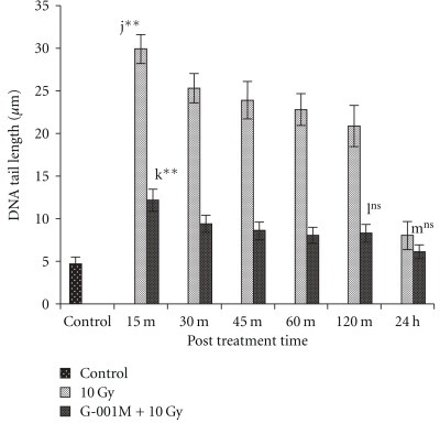 Effect of P. hexandrum sub-fraction (G-001M) on DNA damage in peripheral blood leucocytes of whole body irradiated (10 Gy) mice. Measurement of DNA damage was done at different time intervals using comet assay in terms of tail length (mean ± SD). Experiments were done in triplicate with three animals in each group. Data points are mean values of 100 cells from each groups. j: Normal versus 15 min 10 Gy; k: l5 min l0 Gy versus 15 min (G-001M + 10 Gy); l: 120 min 10 Gy versus l20 min (G-001M + 10 Gy); m: 24 h 10 Gy versus 24 h (G-001M + 10 Gy) (**P < .001, ns, non significant).