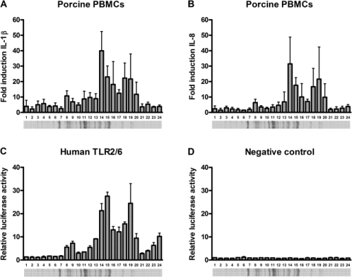Porcine PBMC and human TLR2/6 stimulation of innate immunity activating fractions.Porcine PBMCs were stimulated with an innate immunity activating fraction of S. suis strain 8067 (concentrated supernatant of penicillin treated bacteria) subdivided into 24 fractions of different molecular sizes. At 4 h post stimulation IL-1β (A) and IL-8 (B) mRNA expression levels were determined by quantitative real time PCR. HeLa 57A cells expressing human TLR2/6 (C), and control cells transfected with vector without insert (D) were stimulated (5 h) with the same 24 fractions. Data represent relative fold activation calculated by dividing the normalized test samples by the normalized activity of medium-stimulated negative control samples. Values represent the mean ± SD of two experiments performed in duplicate. Fractions that induced >5 fold porcine PBMC activation were analyzed by mass spectrometry (Table 1).