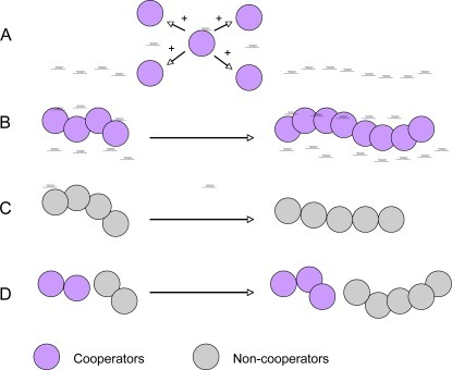 A schematic diagram describing quorum sensing-mediated social cooperation and conflict. Social cooperation provides benefits to the population but has a cost for the cooperative cells. Cooperative cells provide fitness benefits to the entire population (A) and have a higher productivity or yield in an exoproduct (B). However, non-cooperative cells (cheaters) may have the lower productivity (C), but can exploit the benefits from the cooperative cells without contribution in mixed populations (D).