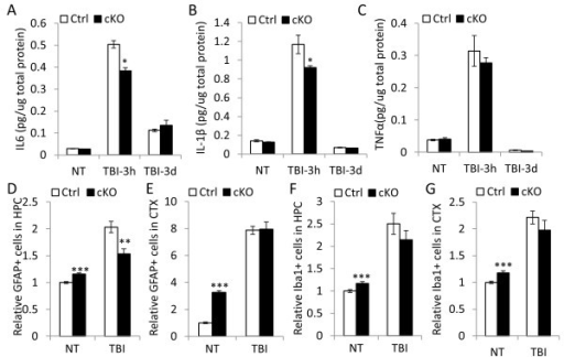 IκBα inactivation in the brain leads to blunted neuroinflammatory response following traumatic brain injury (TBI). TBI were performed on 10–12 month old Ctrl and cKO mice. (A-C) IL6 (B), IL-1β (C) and TNFα (D) levels assayed by ELISA 3 hours and 3 days post-injury. N = 3/genotype. (D-G) Relative GFAP-positive (D and E) or Iba1-positive (F and G) cells in HPC (D and F) or CTX (E and G) in response to TBI at 14 days after TBI. All values were normalized to numbers of NT Ctrl mice. N = 6 mice/genotype. For each mouse, 3 evenly spaced sections were used for quantification. *p < 0.05; **p < 0.01; ***p < 0.001.