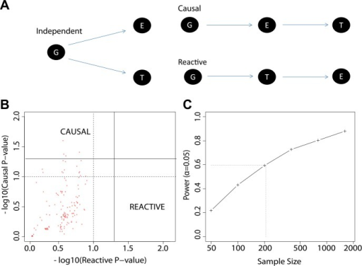The study design permits causal and reactive model analyses.(A) Three models were evaluated, each showing a candidate hypothesis for the three-way association between genotype (G), expression (E) and trait (T). In the independent model, expression and trait each associate with genotype but are not themselves directly related. In the causal model, expression mediates the association between genotype and trait. In the reactive model, genotype and expression relate through the trait, so that gene expression changes are a downstream response to the trait. (B) p-values for independent-versus-reactive and independent-versus-causal hypothesis tests. Each point shows the result for one SNP-transcript pair. Points to the right of the solid vertical line are significant (p<0.05) for the reactive hypothesis and points above the solid horizontal line are significant for the causal hypothesis. The dashed line shows a p=0.1 threshold. (C) Power for rejection of the independent hypothesis. Non-independent data were simulated with effect sizes and variances similar to those in the enrichment set (the set of SNP-transcript pairs that were found to be significant in our study). The curve shows the proportion of cases in which the simulated data rejected the independent () hypothesis. The dotted line indicates the combined sample size in our study.DOI:http://dx.doi.org/10.7554/eLife.00299.009