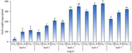 Changes in fresh weight per explant basis as affected by different concentrations of BAP (mg/L) in combination with GA3 (mg/L) for tea clone Iran 100.