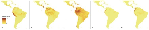 Current distribution of the suitable habitats of Vargasiella (A), Warrea costaricensis (B), Warrea warreana (C), Warreopsis pardina (D) and Warreopsis parviflora (E).