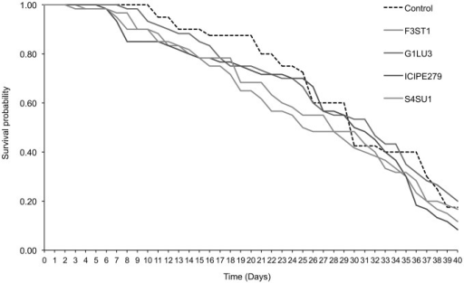 Progeny survival curves of Diglyphus isaea emerging from Vicia faba plants endophytically-colonized by different fungal isolates of Beauveria bassiana (S4SU1, G1LU3 and ICIPE279) and Hypocrea lixii (F3ST1) and infested with 2nd and 3rd instar larvae of Liriomyza huidobrensis.