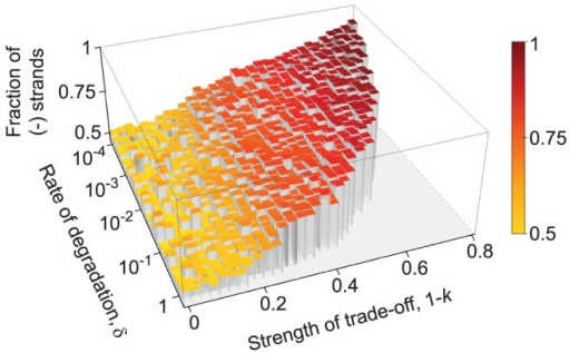 The effect of degradation rate of macromolecules on strand asymmetry.The equilibrium ratio of the minus and plus strands (indicated by the heights as well as the colors of the bars; red: 0.9→yellow: 0.5) is not affected significantly by the rate of degradation, however increasing the degradation rate above a threshold results in the extinction of the replicators (notice the flat grey area on the right hand side of the graph). For strong trade-off (), this threshold is at a lower rate of degradation, whereas higher degradation rates are tolerated as the strength of trade-off decreases (). The results are averaged over 3 replicate model runs. Other parameters: , , , , , , , , ,  and .