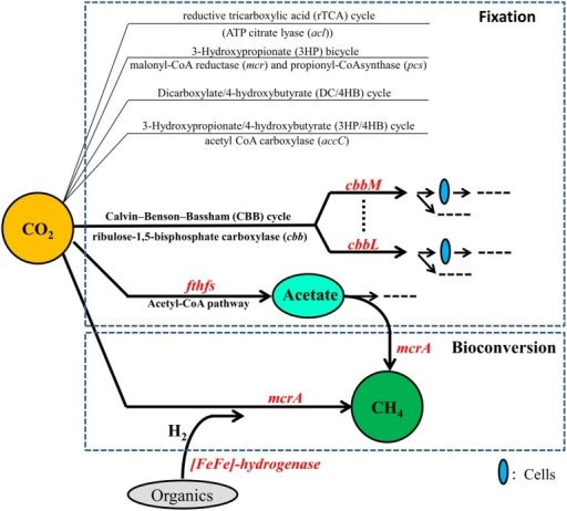 Genes and pathways for CO2 fixation and bioconversion into CH4.