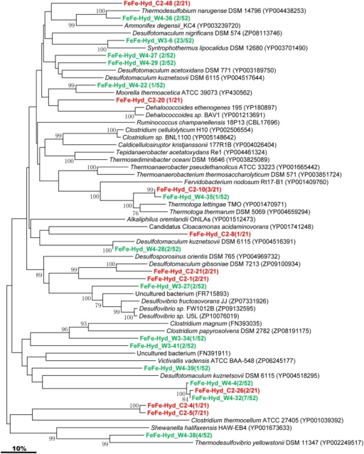 Phylogenetic tree of the [FeFe]-Hydrogenase gene retrieved from the water samples (colored) and closely related sequences from GenBank database. Alignments to related sequences (shown with accession number) were performed with MEGA 5 software. The topology of the tree was obtained with the neighbor-joining method. Bootstrap values (n = 1000 replicates) greater than 50% are reported. Scale bar represents 10% amino acid substitution.
